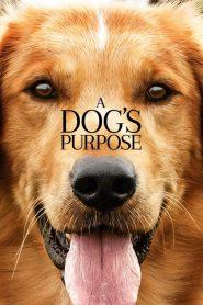 A Dog's Purpose (2017) Online Subtitrat in Romana HD Gratis