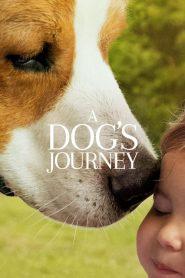 A Dog's Journey (2019)
