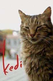 Kedi (2017)