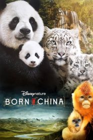 Born in China (2016) Online Subtitrat in Romana HD Gratis