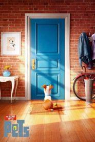 The Secret Life of Pets (2016) Online Subtitrat in Romana HD Gratis