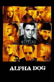 Alpha Dog (2006) Online Subtitrat in Romana HD Gratis
