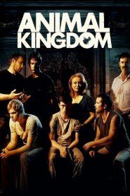 Animal Kingdom (2010) Online Subtitrat in Romana HD Gratis