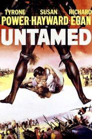 Untamed (1955)