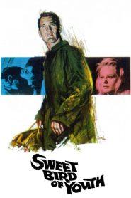 Sweet Bird of Youth (1962) Online Subtitrat in Romana HD Gratis