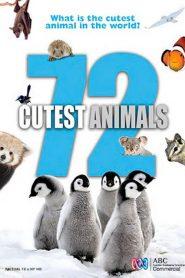 72 Cutest Animals Sezonul 1 Online Subtitrat in Romana HD Gratis