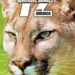 72 Dangerous Animals: Latin America Sezonul 1