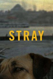 Stray (2020)