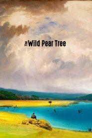 The Wild Pear Tree (2018) Online Subtitrat in Romana HD Gratis